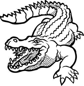Dibujos De Cocodrilos Cocodrilopedia